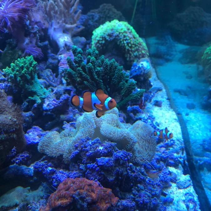 いつかの熱帯魚